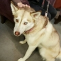Pet of the Week- Luna- 2/9/16